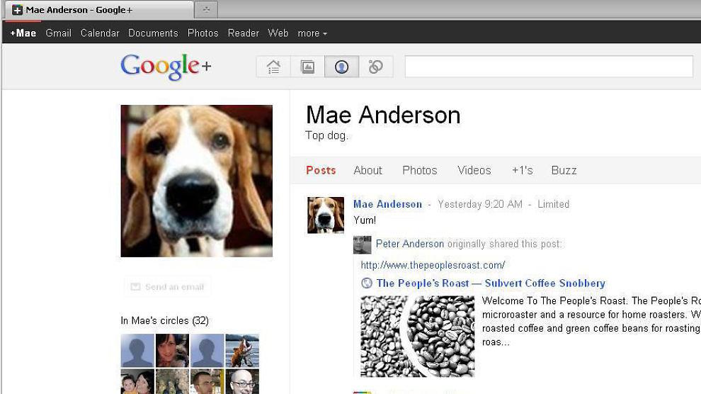 KATTER OG HUNDER: Vel er det allerede postet mange bilder av familiens kjæledyr på nykommeren Google+, men den nye storsatsingen gir deg flere smarte valg, skriver Espen Andersen.