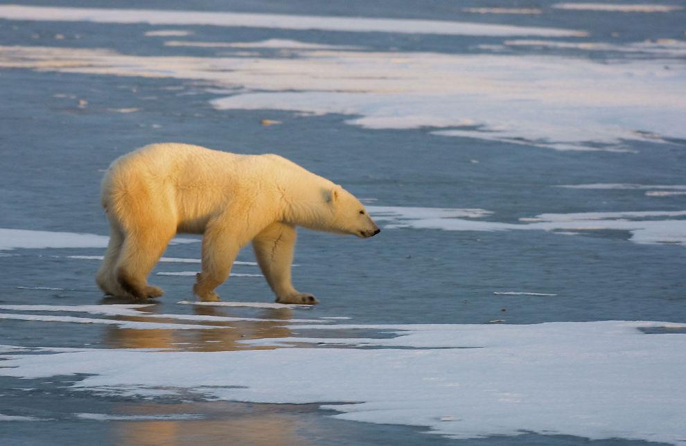 IKKE SÅ ILLE: E24s spaltist skriver at klimaendringene nødvendigvis ikke blir så ille som FNs klimapanel har forespeilet.