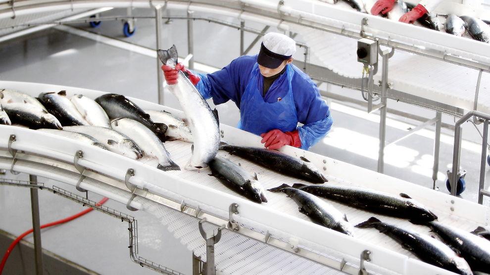Bakkafrost прогнозирует рост цен на лосося из-за гибели рыбы в Чили