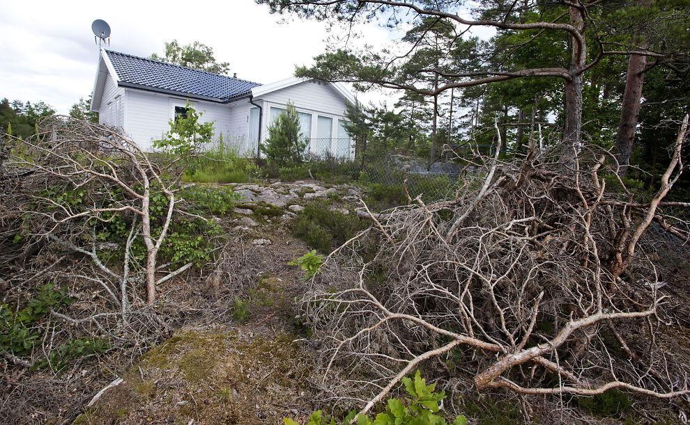 Felling av trær på kommunal grunn