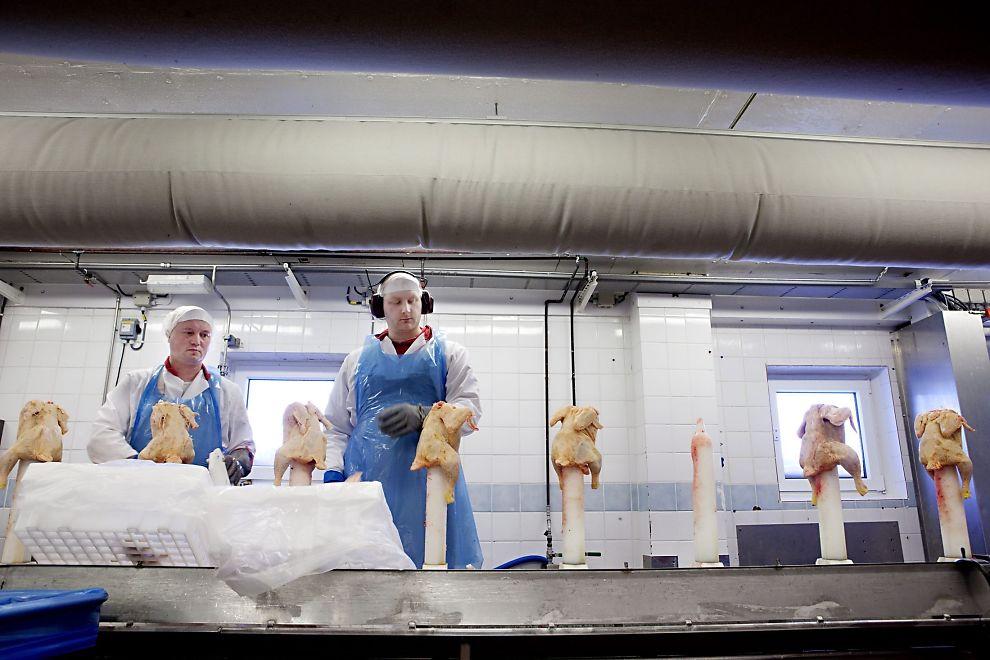 <p><b>DEN GAMLE FABRIKKEN:</b> Roman Romanous (t.v.) og Georg Wedel skjærer Liveche-kylling på Norturas gamle anlegg på Hærland. Nå skal anlegget utvides med 9.000 kvadratmeter og moderniseres kraftig.</p>
