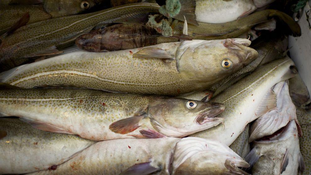 norske fiskeslag