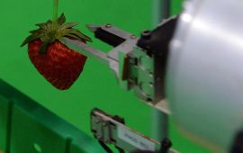 <p><b>STADIG SMARTERE:</b> Roboter utfører stadig mer kompliserte oppgaver. Denne japanske maskinen sorterer bær- og frukt. Den klarer å skille hva som er modent og ikke, via tre kameraer som vurderer farge og form.<br/></p>
