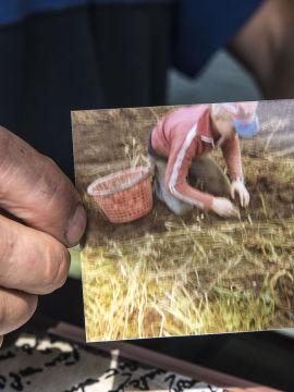 <p><b>TIDLIG KRØKES:</b> Terje Romsaas har vært bonde nesten hele livet. Her er han en av mange medhjelpere i potetferien hjemme på gården.<br/></p>