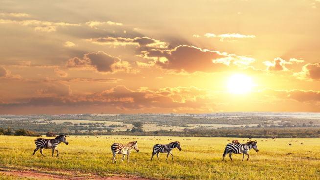 <p><b>PÅ SAVANNEN:</b> Sør-Afrika og safariturismen har lenge vært en hit blant turistene. Nå kan landet også i større grad lokke investorer.</p>
