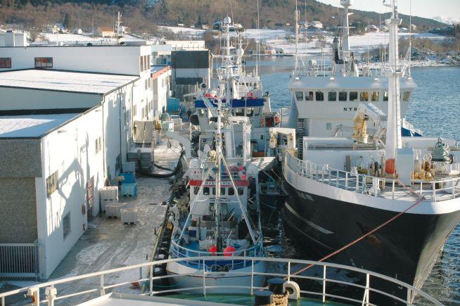 <p><b>SILDEEKSPORTØR:</b> Fiskebedriften Brødrene Sperre mistet et marked på 150 millioner kroner i året da sanksjonene mot Russland ble innført, og russerne svarte, i 2014. Bedriften holder til utenfor Ålesund.</p>
