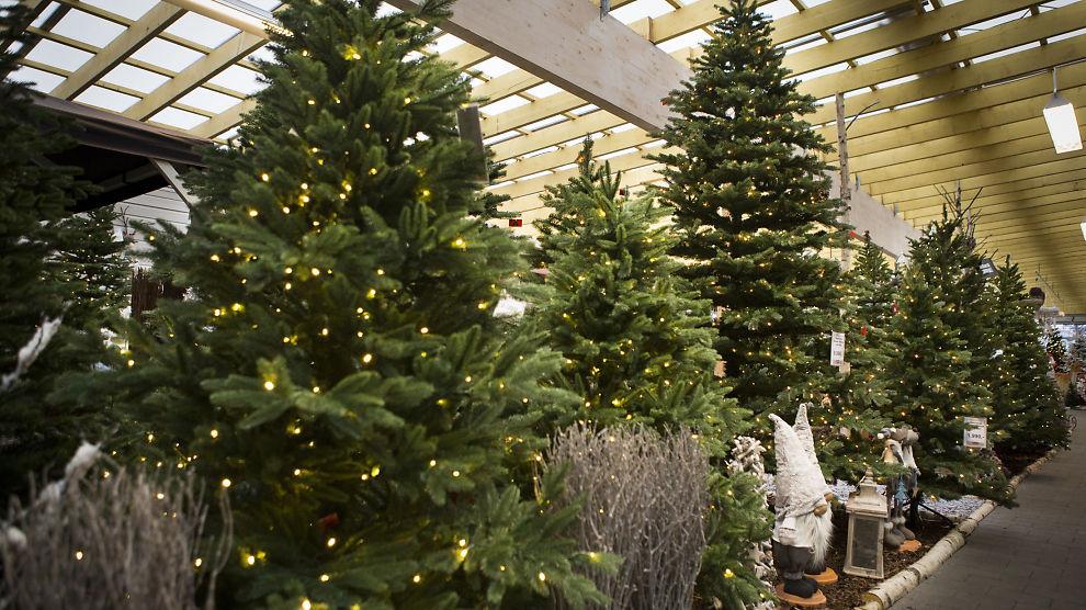Fantastisk Norske juletreprodusenter frykter ikke plasttrær - Næringsliv - E24 SN-84